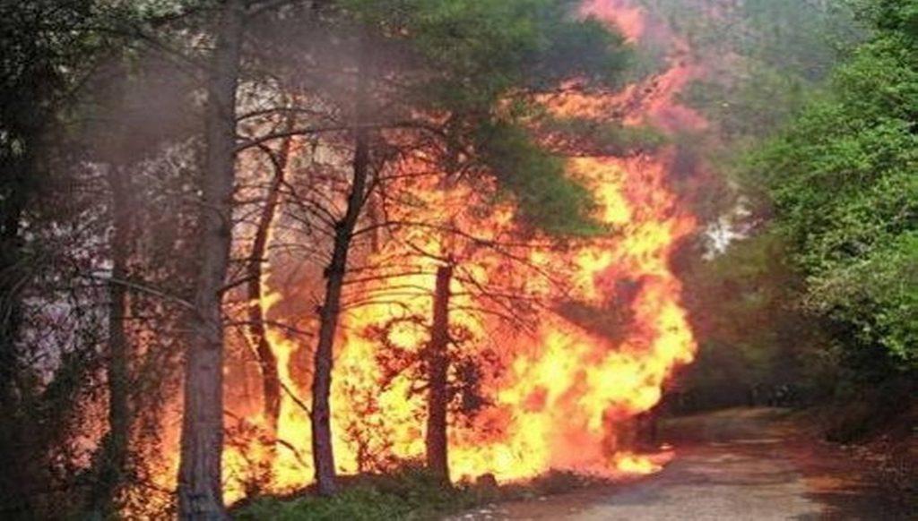 صورة حرب على غابات الساحل السوري… من يحرقها عمدا؟