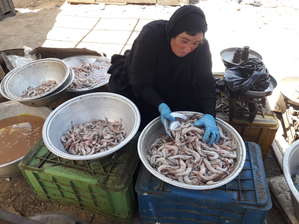 Photo of BASRA'S BEST SHRIMP SELLER: A day with the shrewd Basra grandma who outsells all the others
